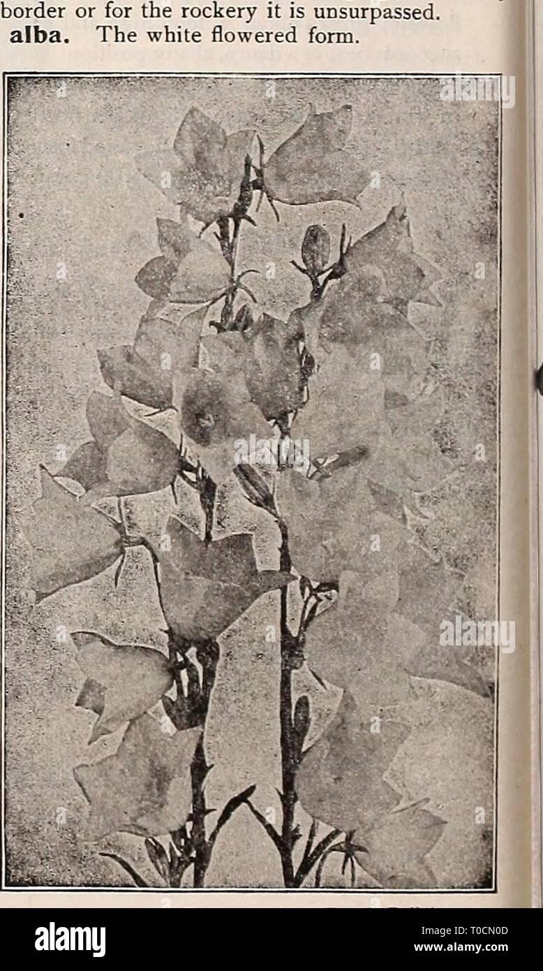 Piante Da Giardino Ombroso dreer's garden prenota 1917 (1917) dreer's garden prenota