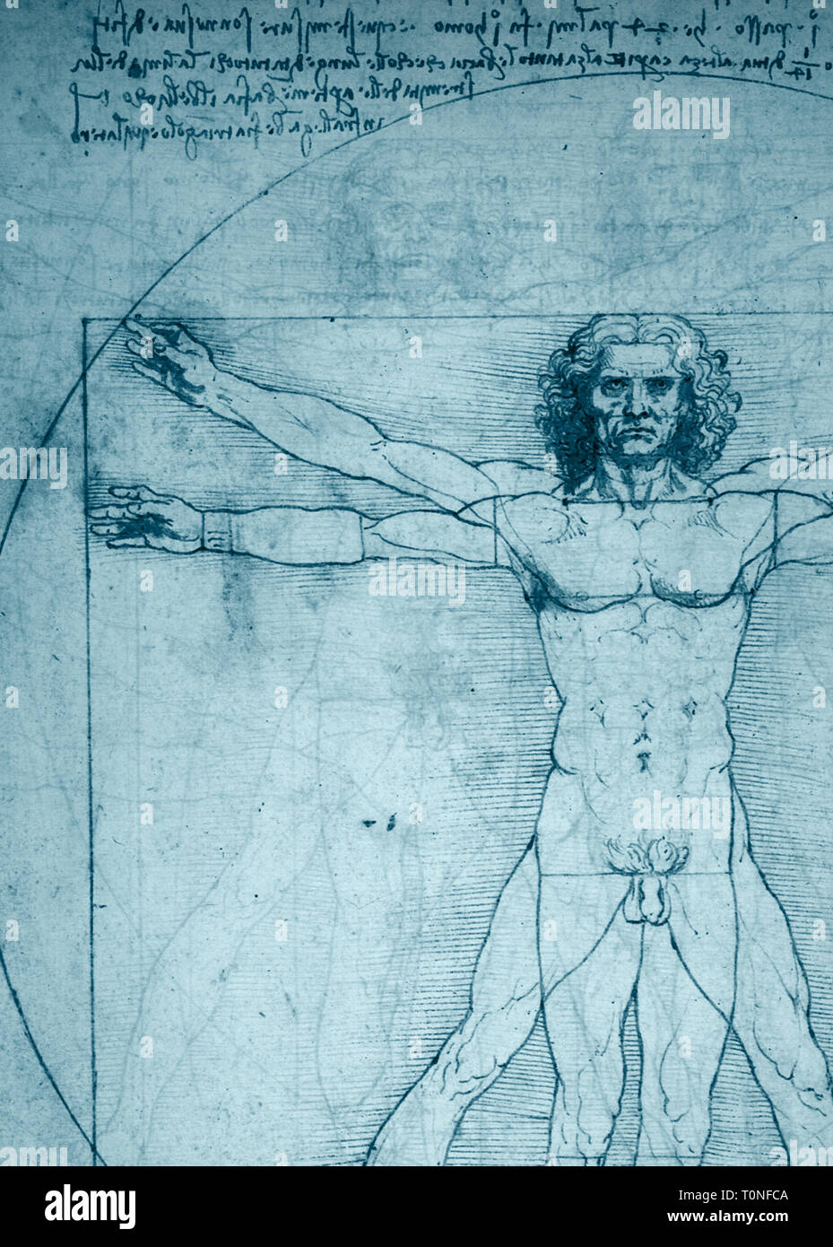 Vitruvian Man Drawing Immagini Vitruvian Man Drawing Fotos Stock
