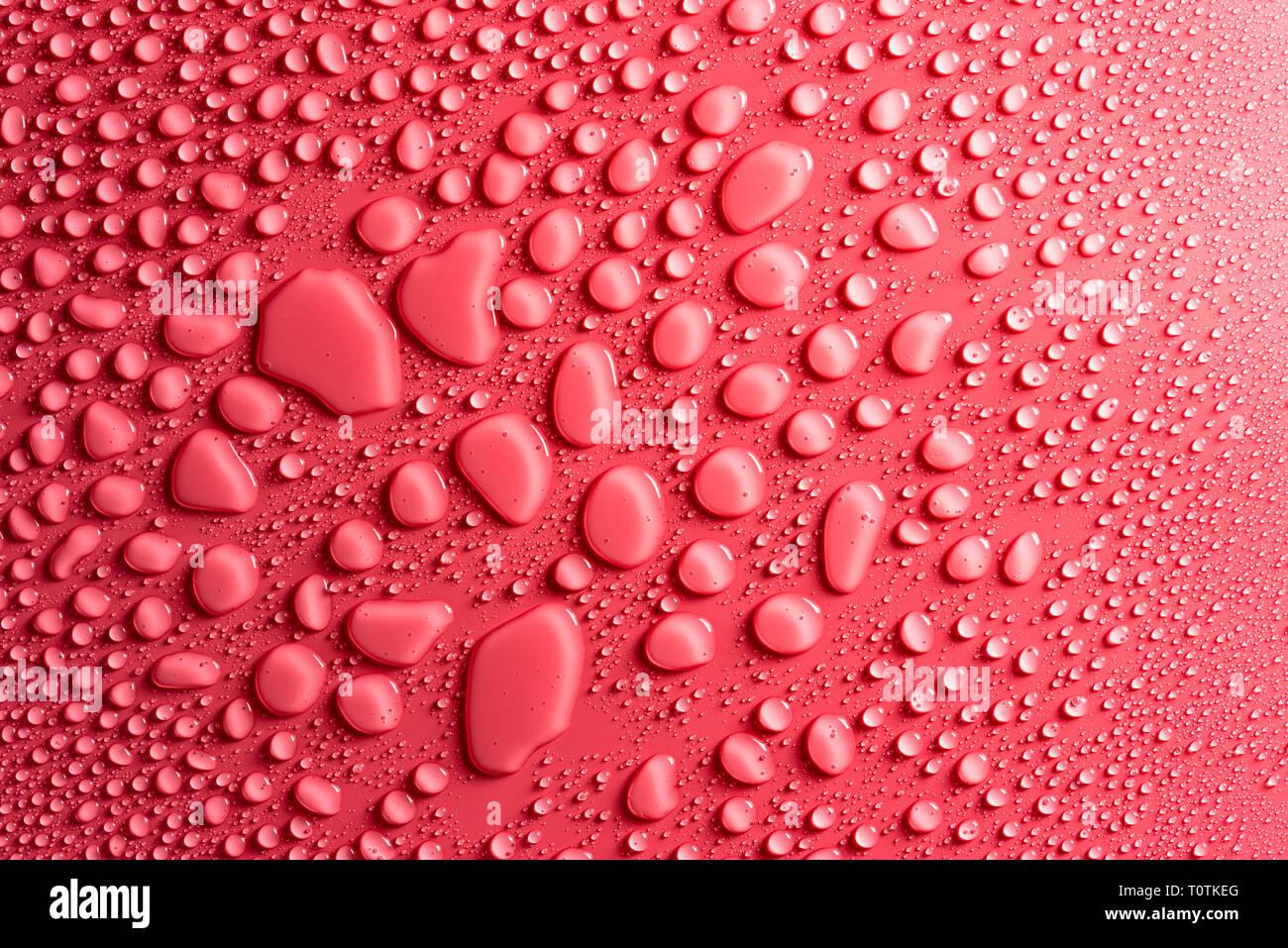 Gocce Di Acqua Su Una Rosa Sfondo Opaco Illuminato Con Una Luce