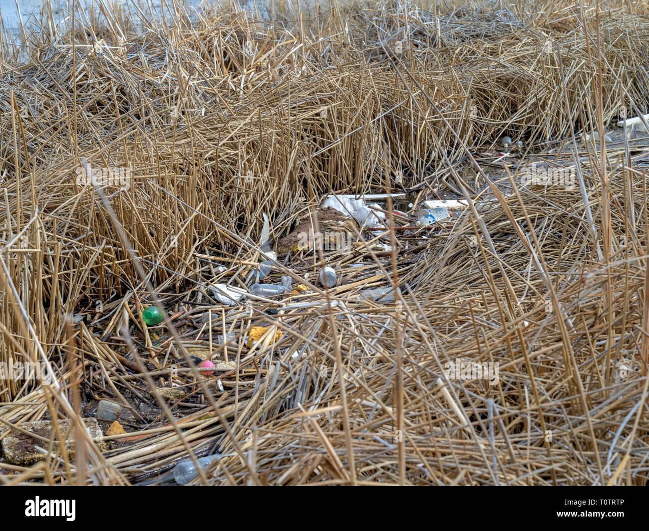 Canal abbandonati Rifiuti e inquinamento in alcuni paludose terre di palude. Immagini Stock