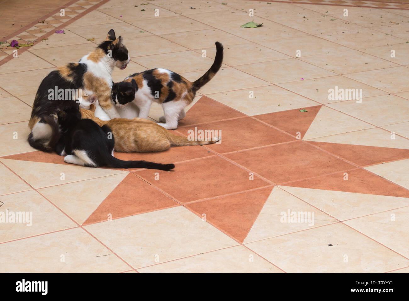 Famiglia di gatti immagini famiglia di gatti fotos stock alamy