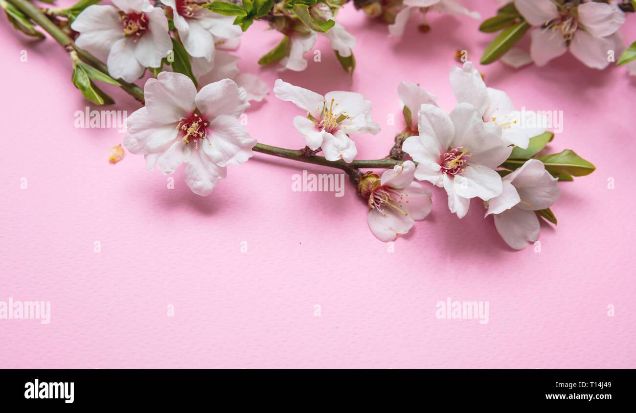 Mandorla Bouquet Di Fiori Su Sfondo Rosa Copia Spazio Primo Piano