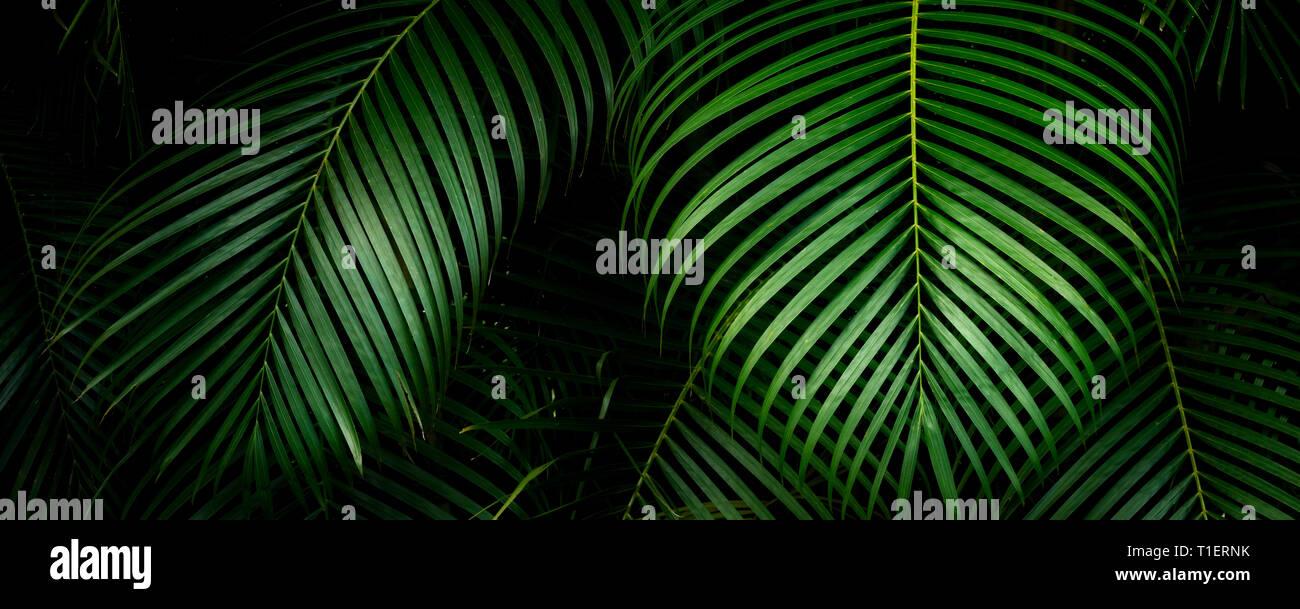 Close up di bambù Palm. Mahi Mahakonia piantagione di mogano. Dal Wai Koa Loop Trail Kauai, Hawaii Immagini Stock
