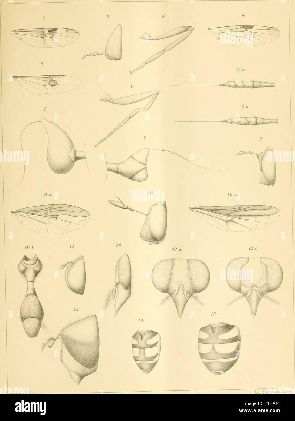 Ditteri del Messico (1892) Ditteri del Messico ditteridelmessic00gigl Anno: 1892 lll. Salussolia-Torino E. Giglio-Tos diseg. Foto Stock