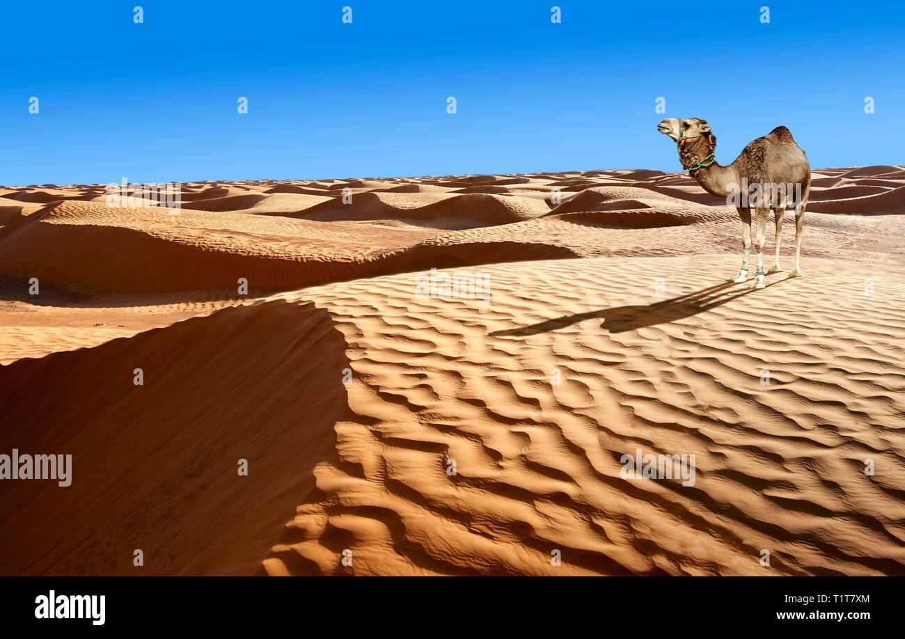 Il deserto del Sahara dune di sabbia di Erg Orientale nei pressi dell'oasi di Ksar Ghilane, Tunisia, Africa Foto Stock