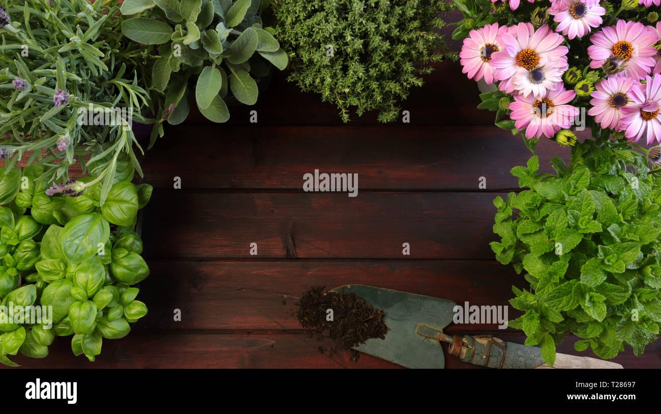 Erbe aromatiche e pala blu su sfondo di legno Immagini Stock