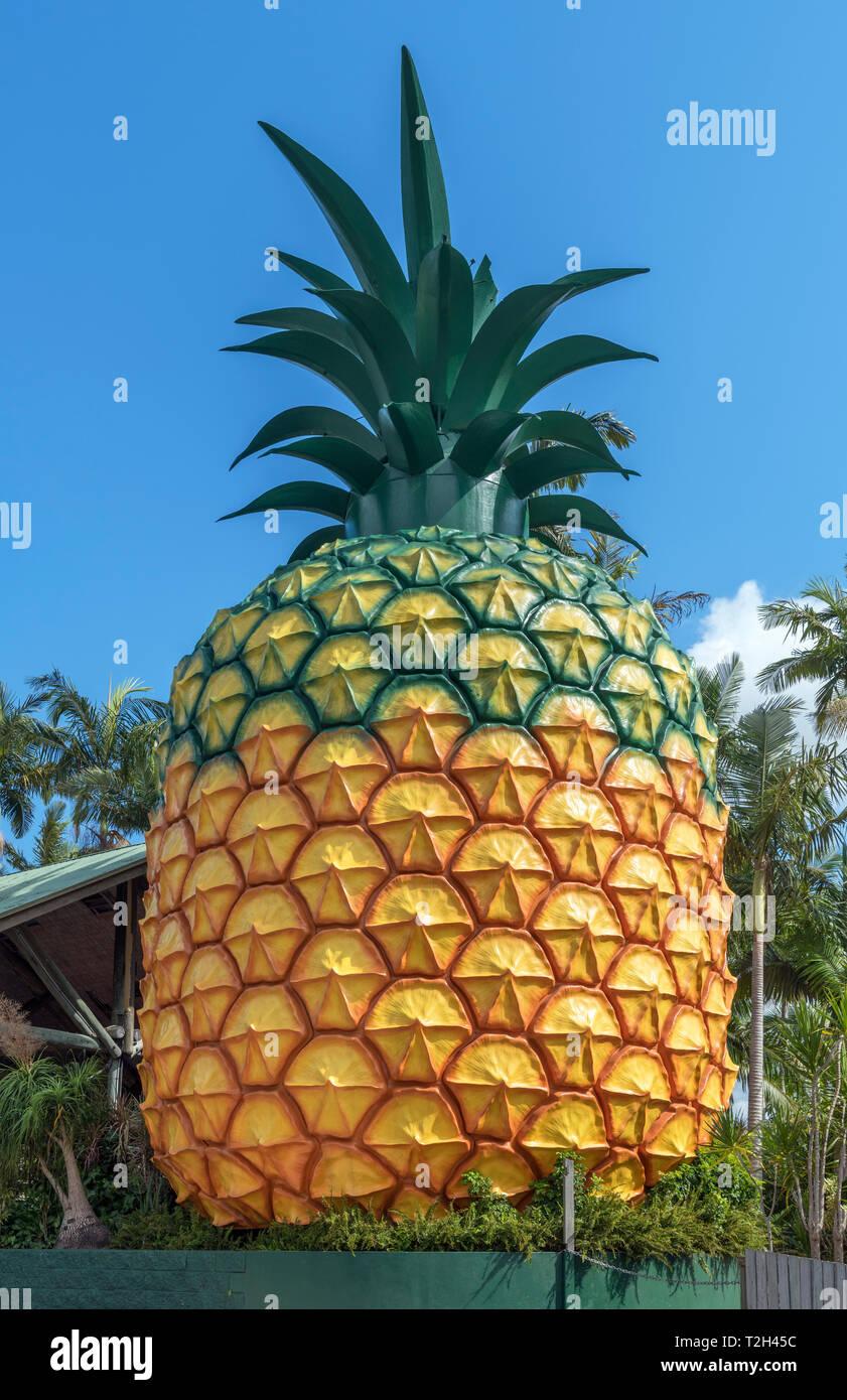 Il Grande Ananas, una strada attrazione sull'Autostrada di Bruce nel Queensland, Australia Immagini Stock