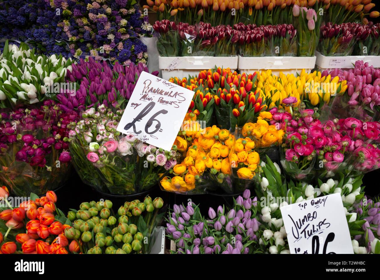 Columbia Road flower market su una domenica mattina di marzo, Bethnal Green, Tower Hamlets, Greater London, London, England, Regno Unito, Europa Foto Stock