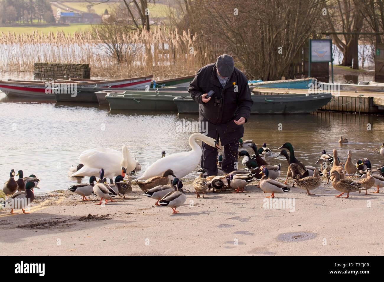 Alimentazione di uccelli sul lago di lato Immagini Stock