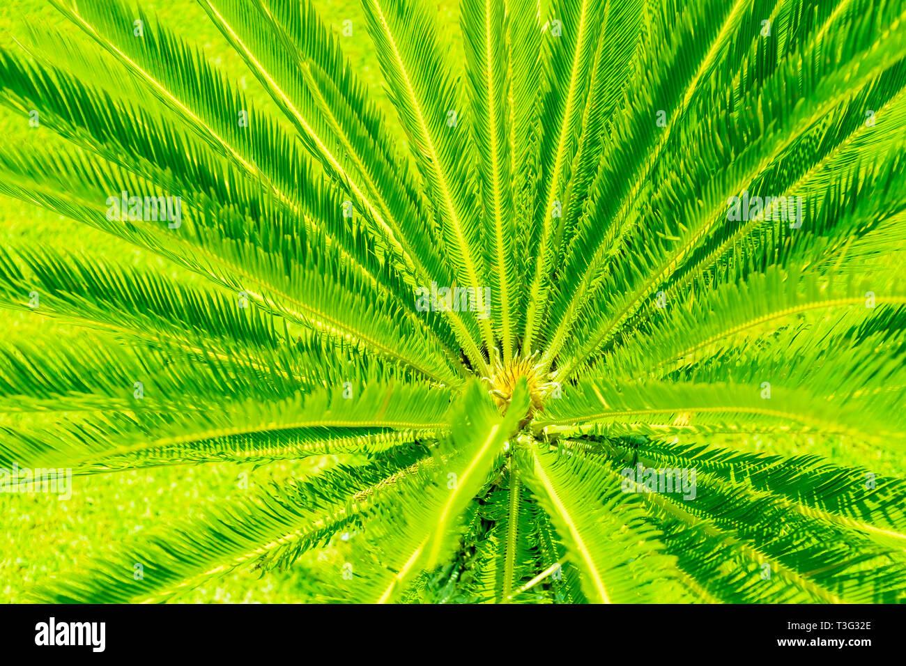Creative Palma Tropicali Disposizione Lascia Acceso Con Ufo Luce