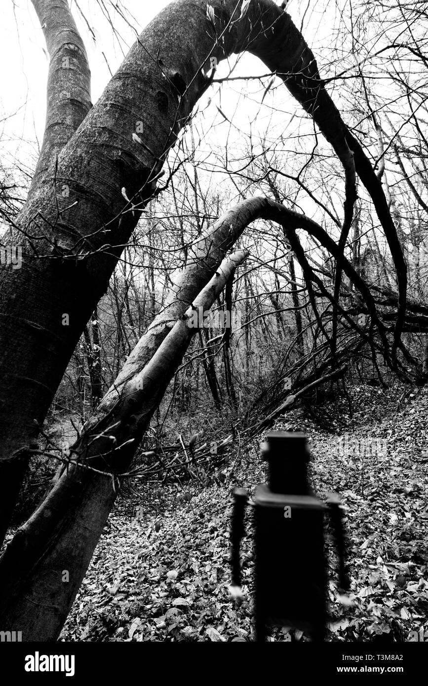 Robot in una foresta Immagini Stock