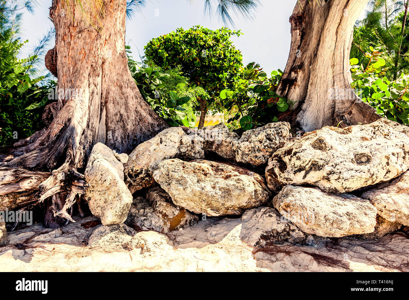 La formazione di pietra a sette miglia di spiaggia di Grand Cayman Immagini Stock