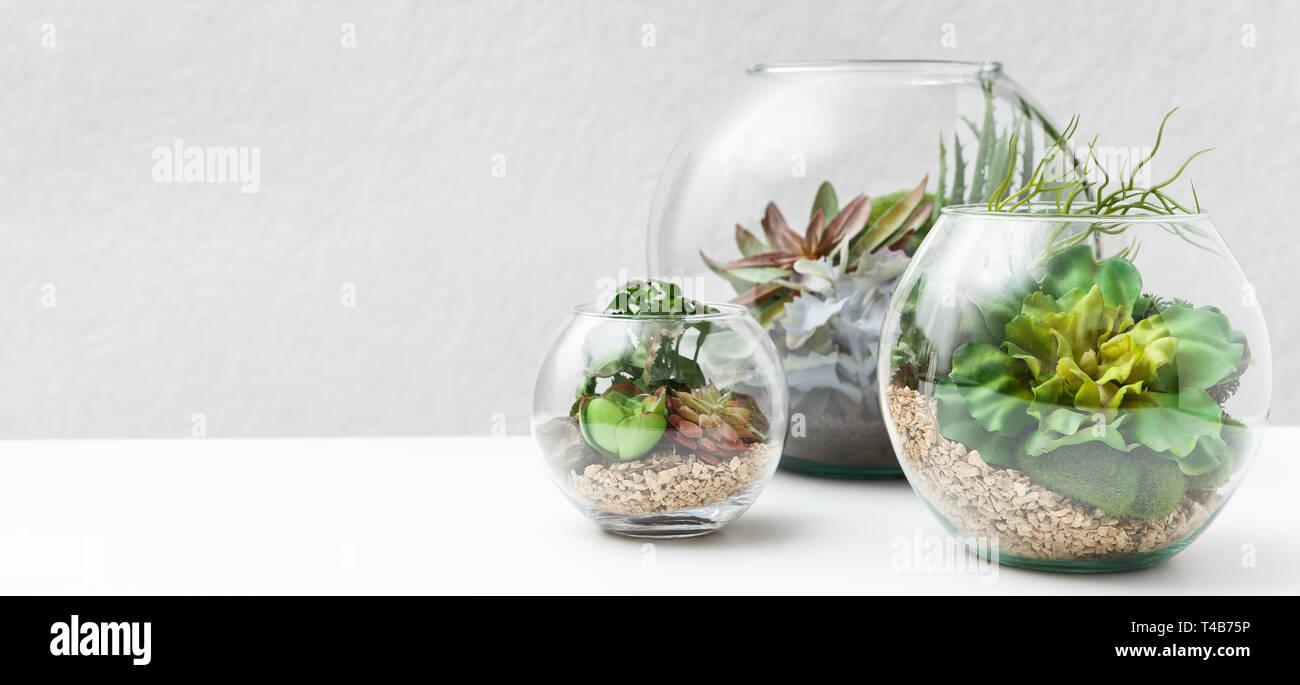 Le piante succulente in vasi florarium, spazio di copia Foto Stock