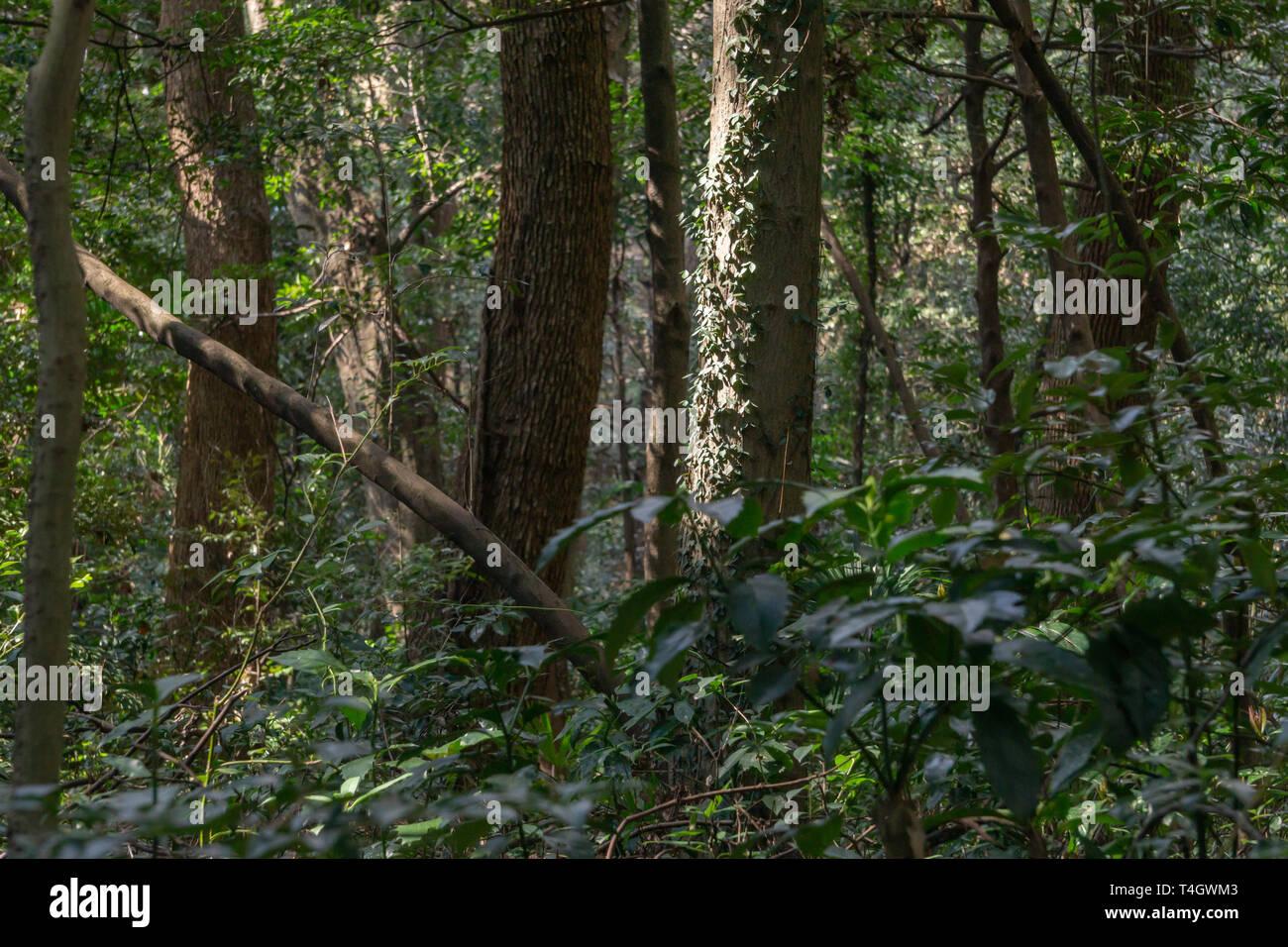 cacciatore di foreste matchmaking