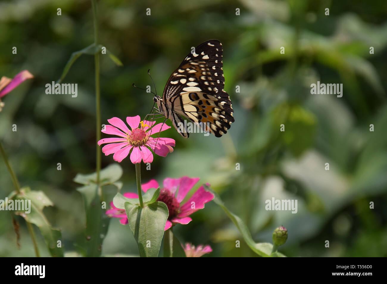 Fiori e farfalla in giardino, street, tutte intorno al vostro fianco, con il bellissimo colore, colore giallo, come tempo di estate Immagini Stock