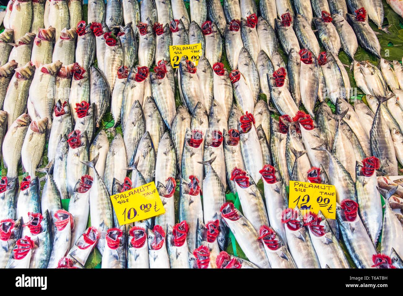 abbondanza di pesce UK Dating gratis