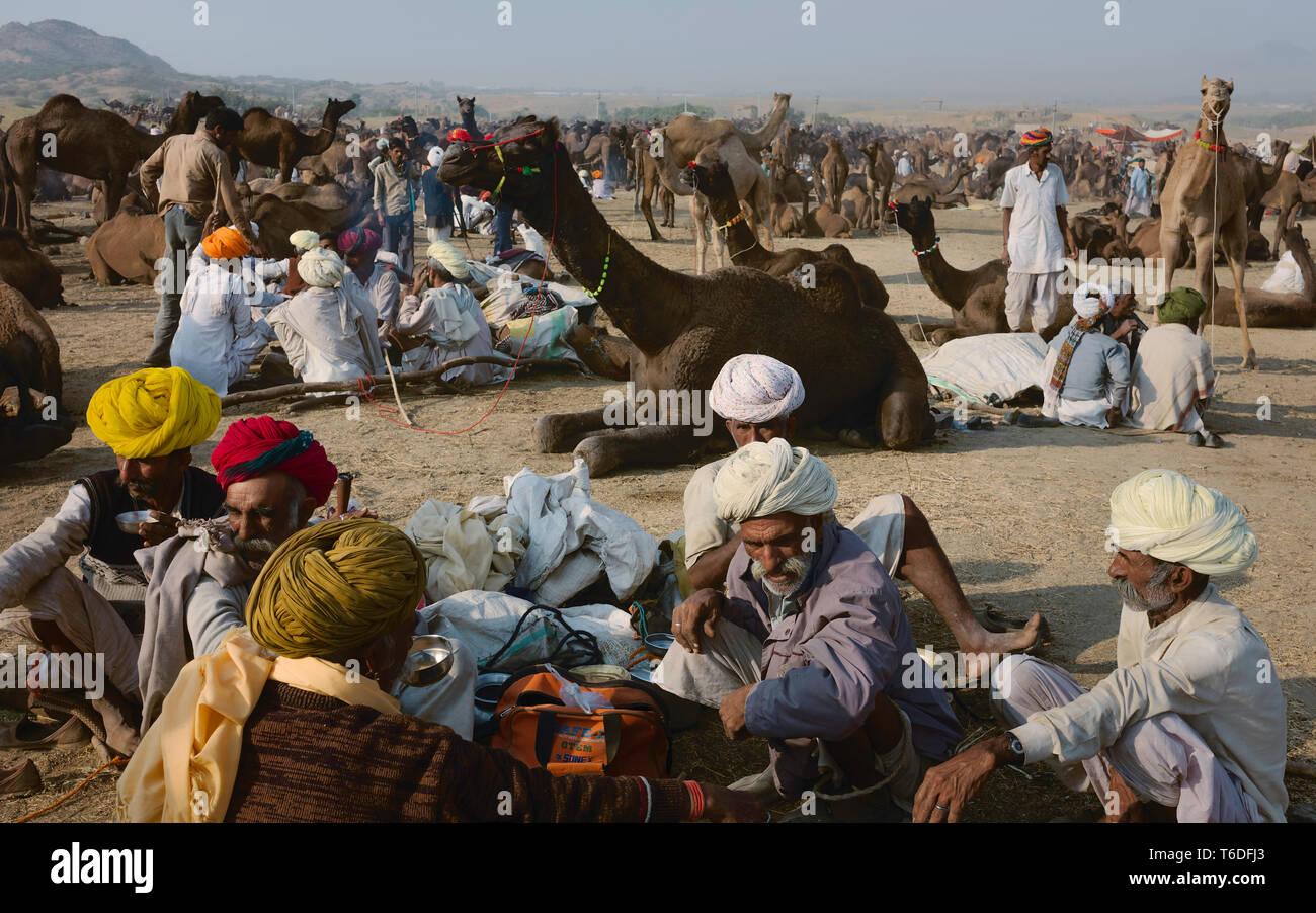 Il cammello tradizionali commercianti negoziare l'acquisto e la vendita di cammelli nel cuore del deserto del Thar in Pushkar, Rajasthan, India. Immagini Stock