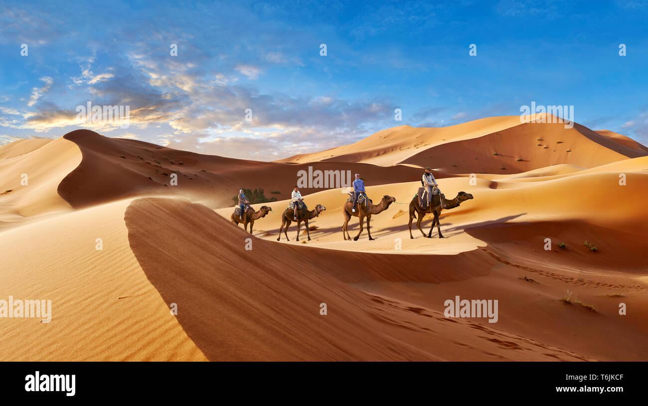 Gite cammelli fra il Sahara dune di sabbia di Erg Chebbi Marocco Foto Stock