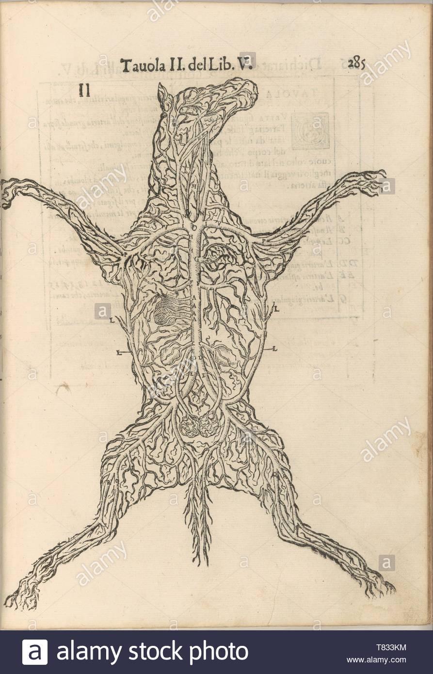 Carlo Ruini-Anatomia del Cavallo. Infirmita del Cavallo Immagini Stock