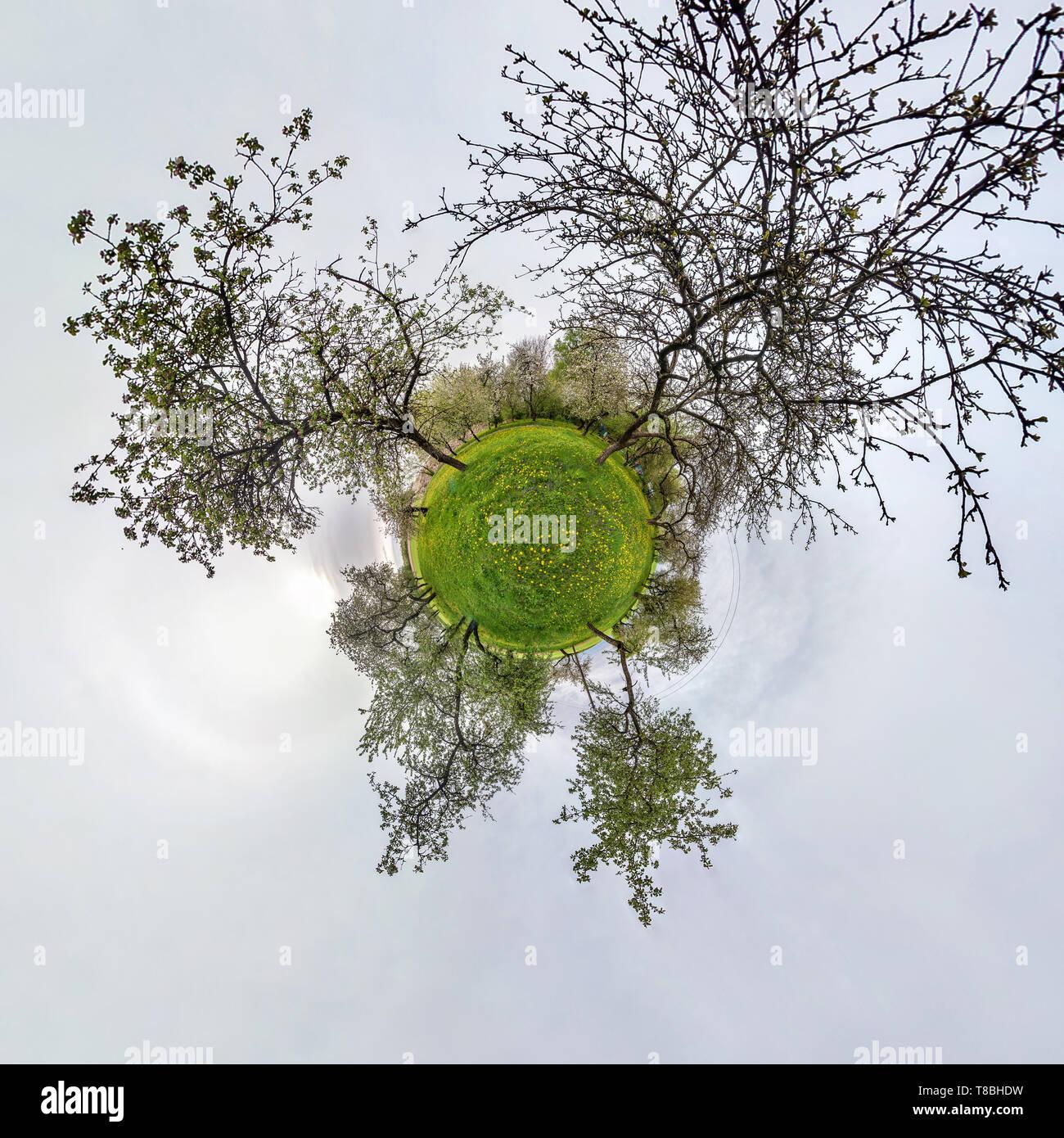 Piccolo pianeta sferiche di panorama a 360 gradi. Antenna sferica vista in apple in fiore giardino frutteto con il tarassaco. La curvatura dello spazio Immagini Stock