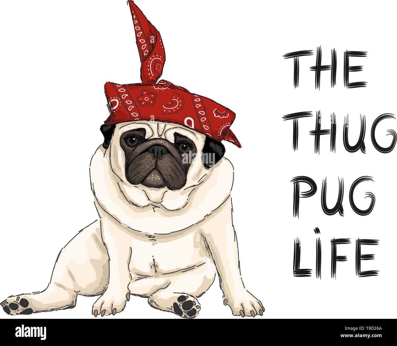 Disegnata a mano illustrazione vettoriale di thug pug cucciolo di cane, sedendosi con red western sciarpa bandana e testo Immagini Stock