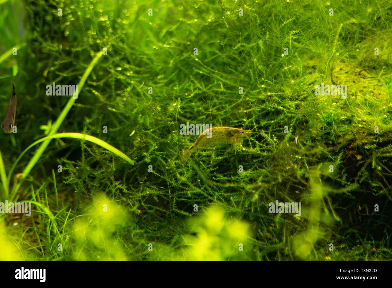 Sfondo opaco trasparente acquario