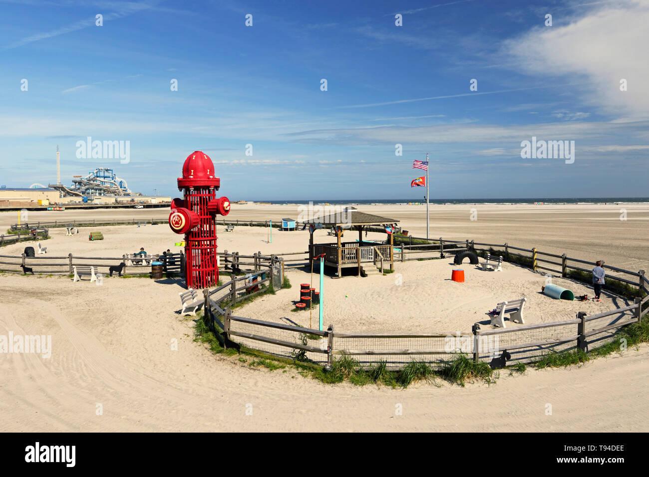 Un cane Parco sulla spiaggia in Wildwood, New Jersey, STATI UNITI D'AMERICA Immagini Stock