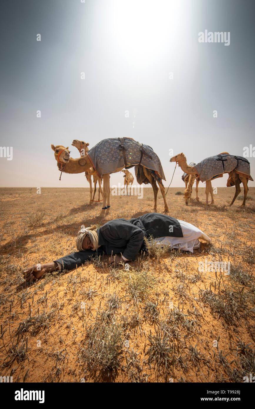 Camel allevatore prendendo un pisolino dopo una lunga giornata di gare, Arabia Saudita Foto Stock