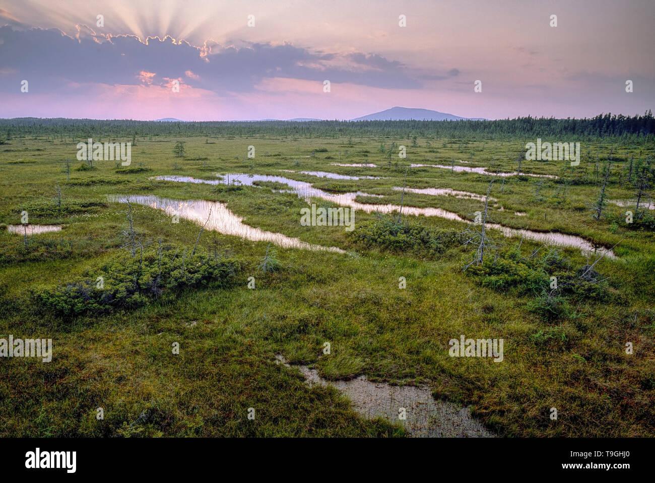 Structured torbiera, Frontenac National Park, Quebec, Canada Immagini Stock