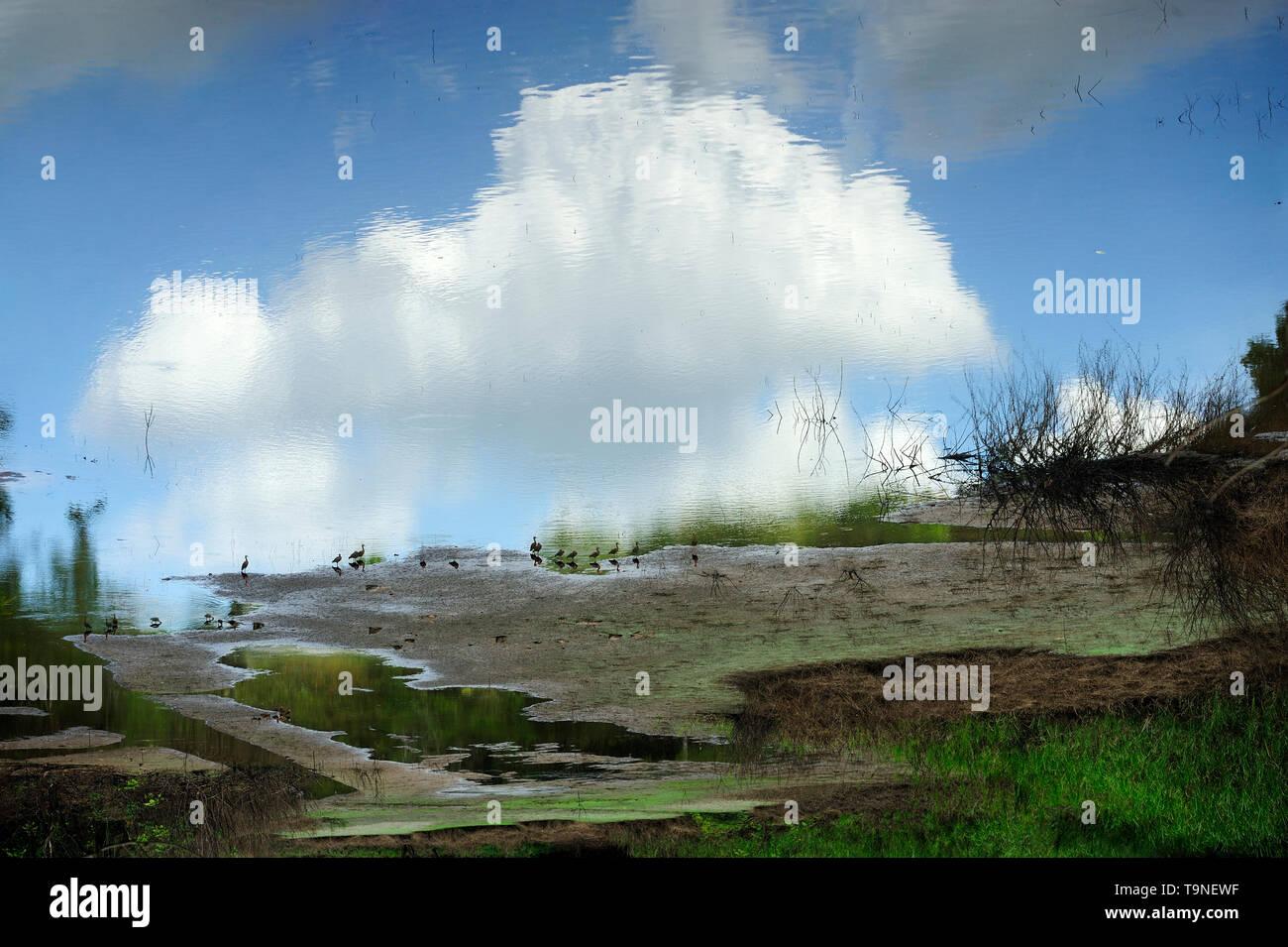 El cielo puede esperar / Parque Nacional Camino de Cruces, Panamá. Immagini Stock