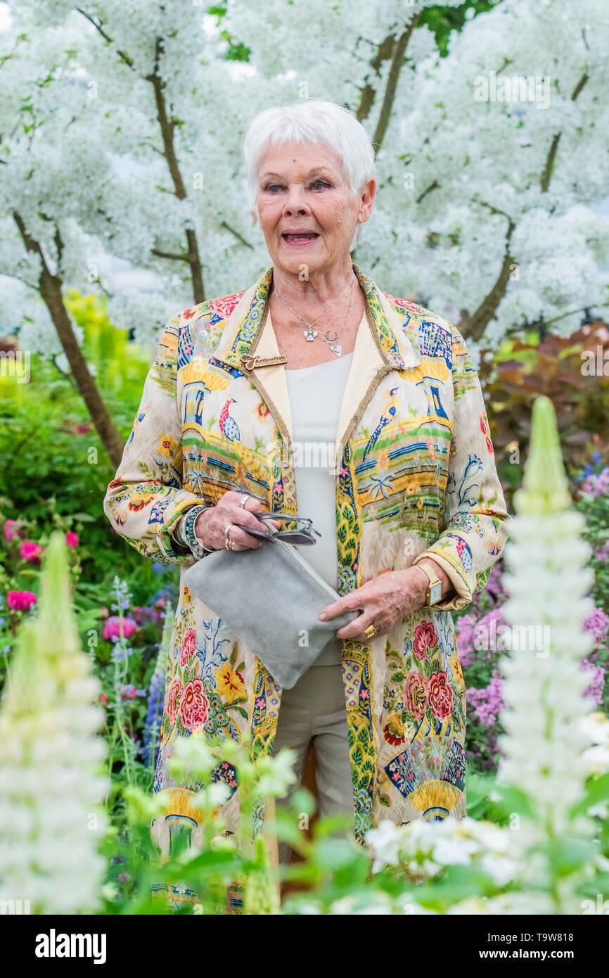 Londra, Regno Unito. Il 20 maggio 2019. Dame Judi Dench lancia una nuova iniziativa elming sul Hillier vivai stand - anteprima stampa giornata al RHS Chelsea Flower Show. Credito: Guy Bell/Alamy Live News Foto Stock