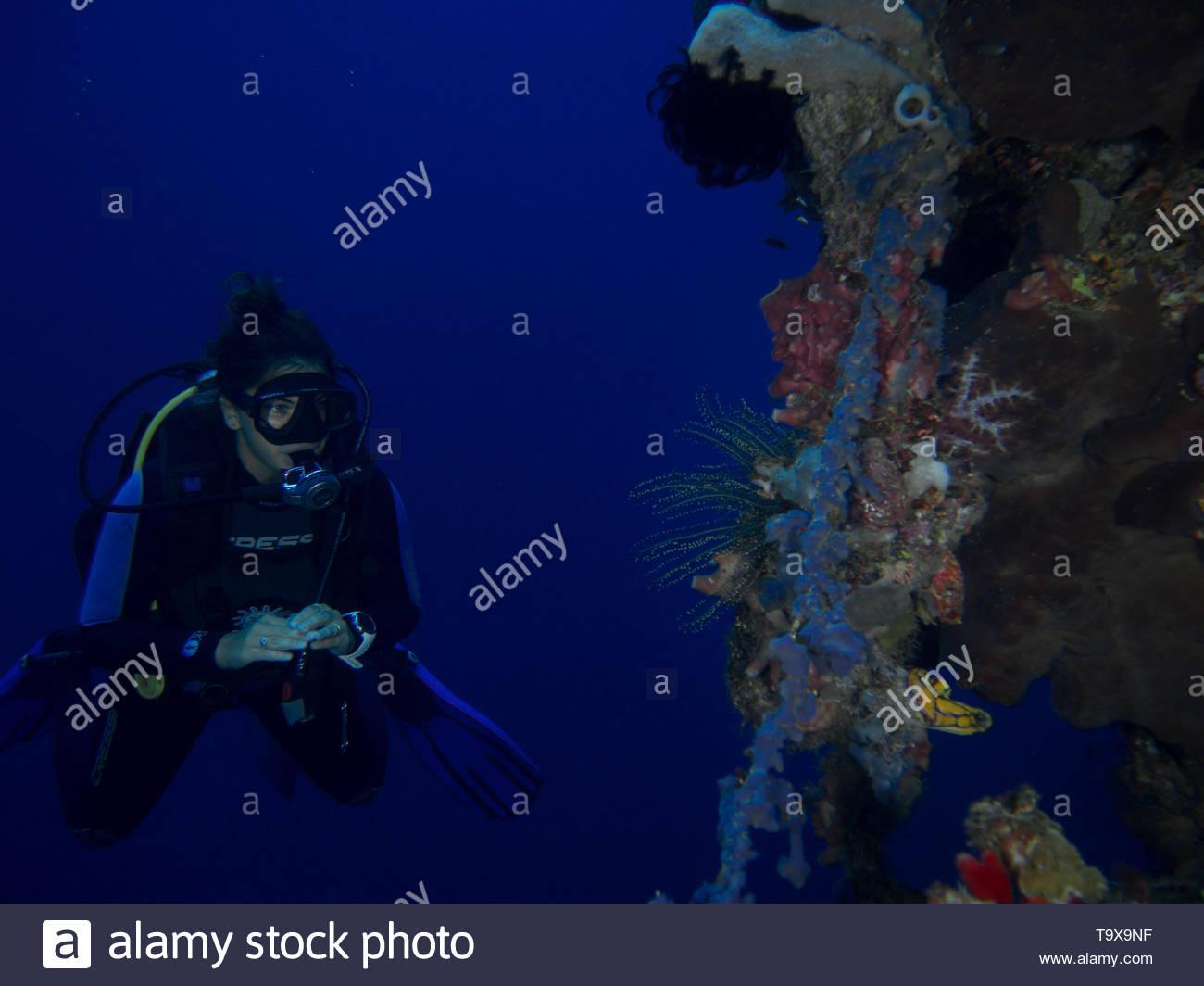 Donna subacqueo e soft coral underwater godendo la barriera corallina del Parco Nazionale di Bunaken, Sulawesi, Indonesia Immagini Stock