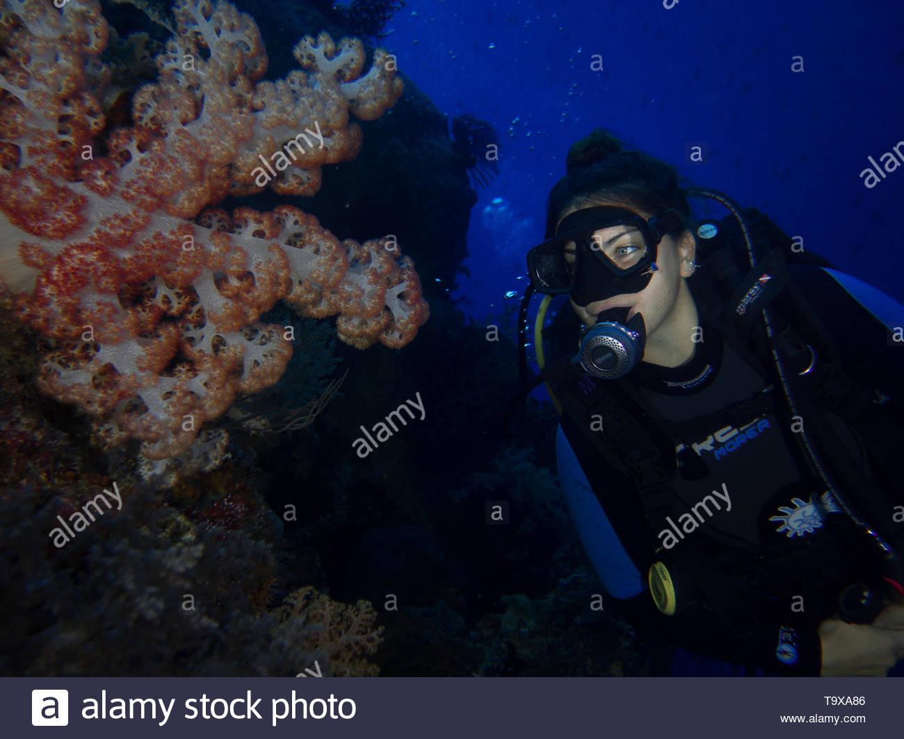 Donna scuba diver (esistente modello di rilascio) e soft coral underwater godendo la barriera corallina del Parco Nazionale di Bunaken, Sulawesi, Indonesia Immagini Stock