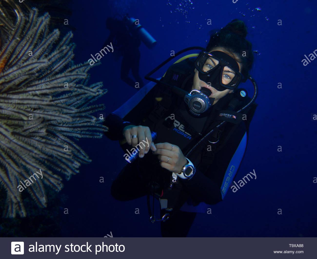 Donna scuba diver (esistente modello di rilascio) e piuma stella di mare underwater godendo la barriera corallina del Parco Nazionale di Bunaken, Sulawesi, Indonesia Immagini Stock