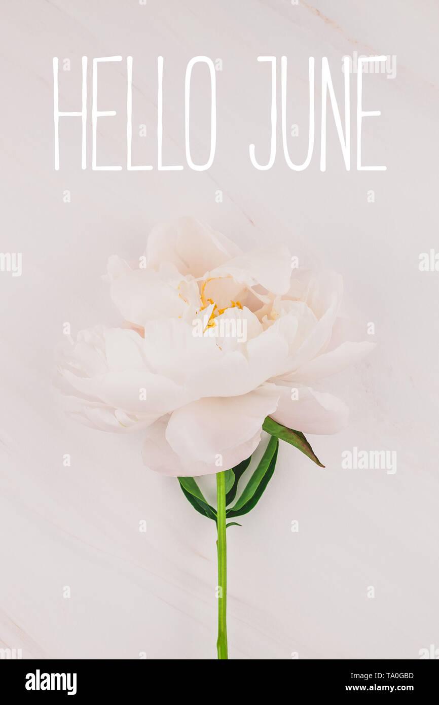 Splendida Fioritura Rosa Peonia Fiore Su Sfondo Marmo Con Ciao