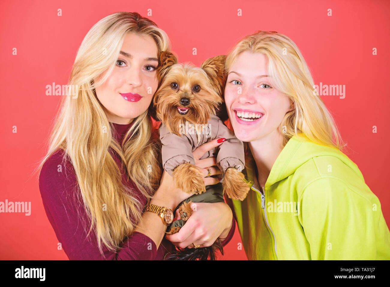 Simpatico cane da compagnia. Yorkshire Terrier razza ama la socializzazione. Bionda ragazze adorano poco simpatico cane. Donne abbraccio Yorkshire terrier. Yorkshire terrier è molto affettuoso cane amorevole che craves attenzione. Immagini Stock