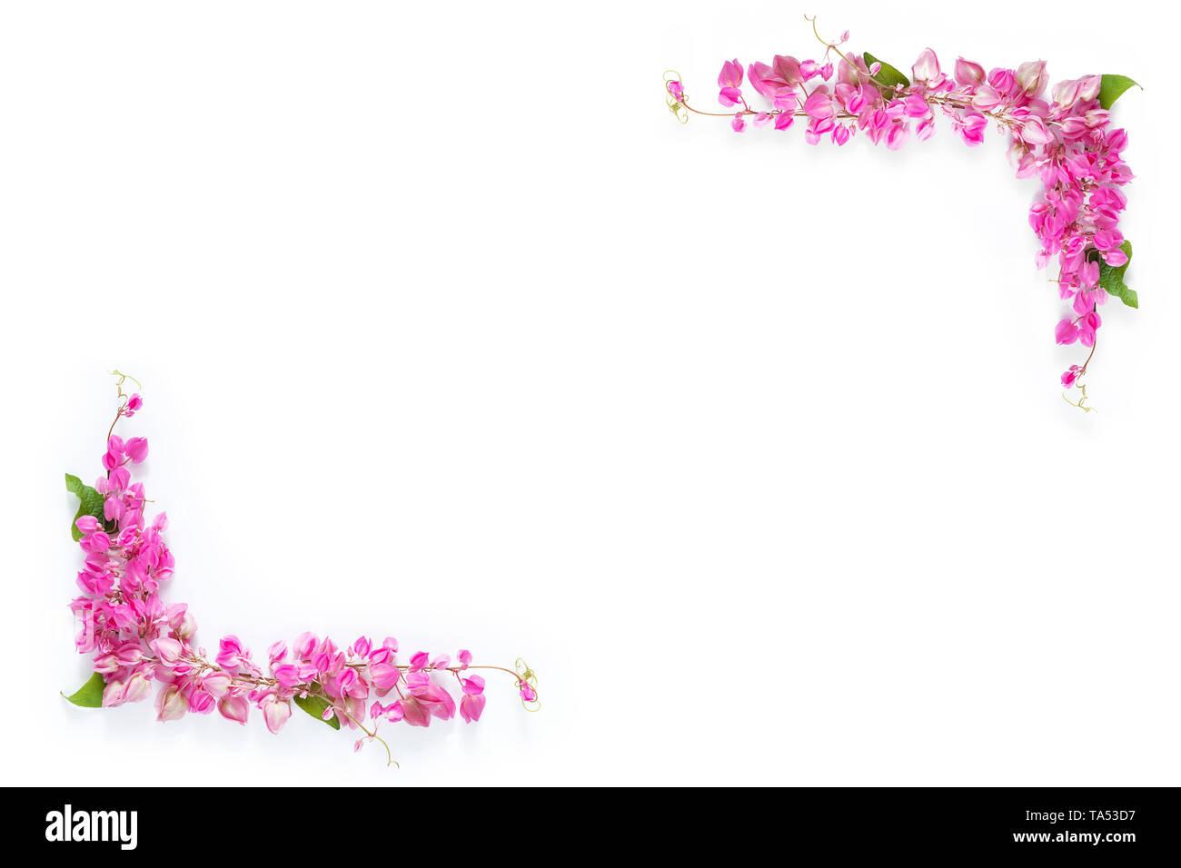 Rosa fiori floreali telaio di frontiera come angolo su sfondo bianco con spazio di copia Foto Stock
