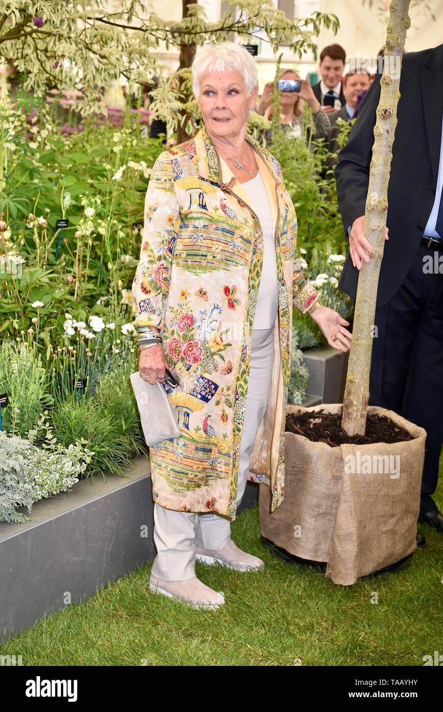 Dame Judi Dench è stata presentata con un alberello elm tree per lanciare il ri-elming della campagna britannica a partire da quest'anno. Hillier vivai, RHS Chelsea Flower Show, Londra Foto Stock