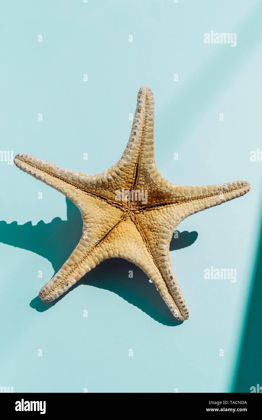 Starfish sul turchese bakground, tavel e concetto di estate. Nessuno. Immagini Stock