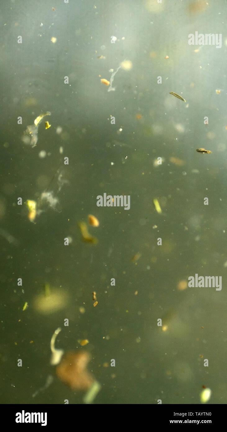 Aqua bio sfondo con particelle di origine vegetale ultra microcosmo macro Immagini Stock