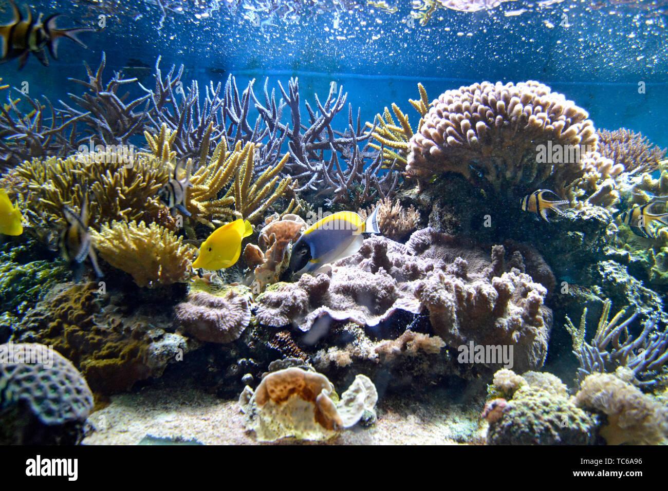 Colorati pesci marini nuotare tra i coralli in London Zoo Acquario, ZSL London Zoo di Londra, Regno Unito Immagini Stock
