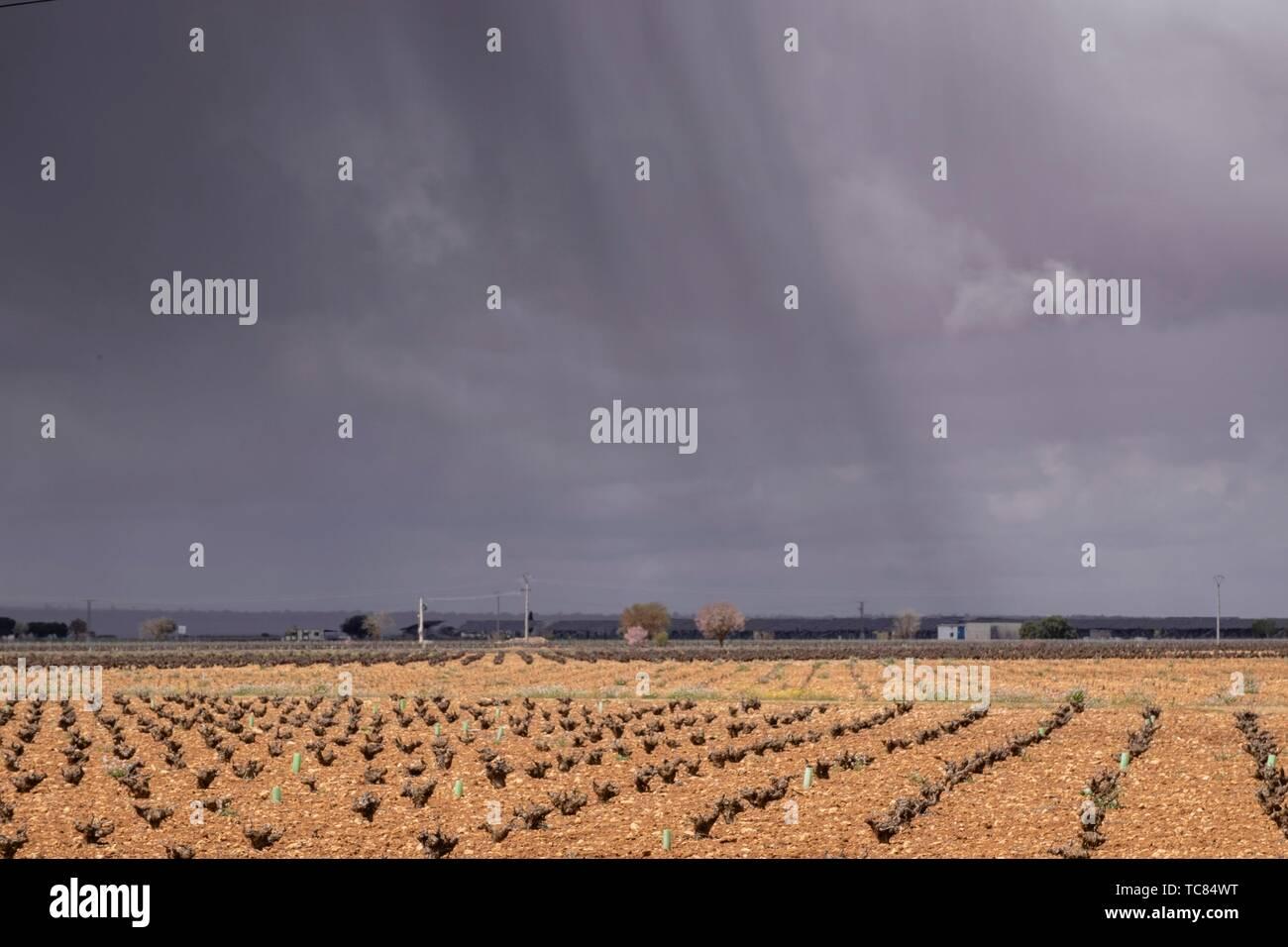 Tormenta sobre n.a. viña, Campo de Criptana, provincia de Ciudad Real, Castilla-La Mancha, in Spagna. Immagini Stock