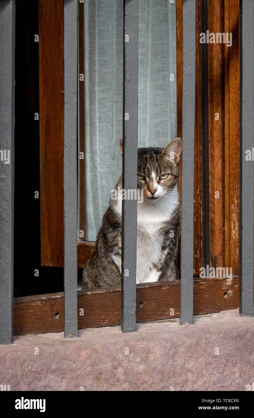 Gatto crogiolarsi nella finestra . Teruel Aragona, Spagna. Immagini Stock