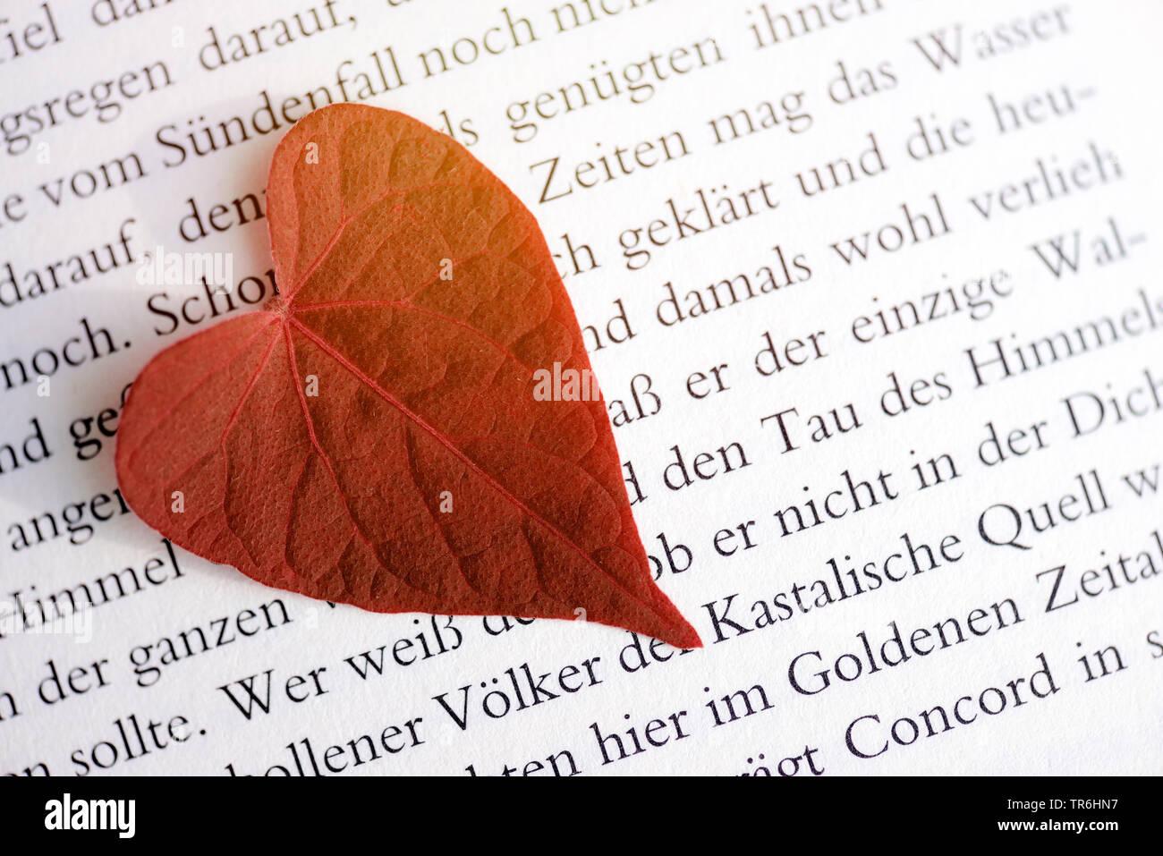 A forma di cuore sulla foglia un bookpage, romanticismo, Germania Immagini Stock