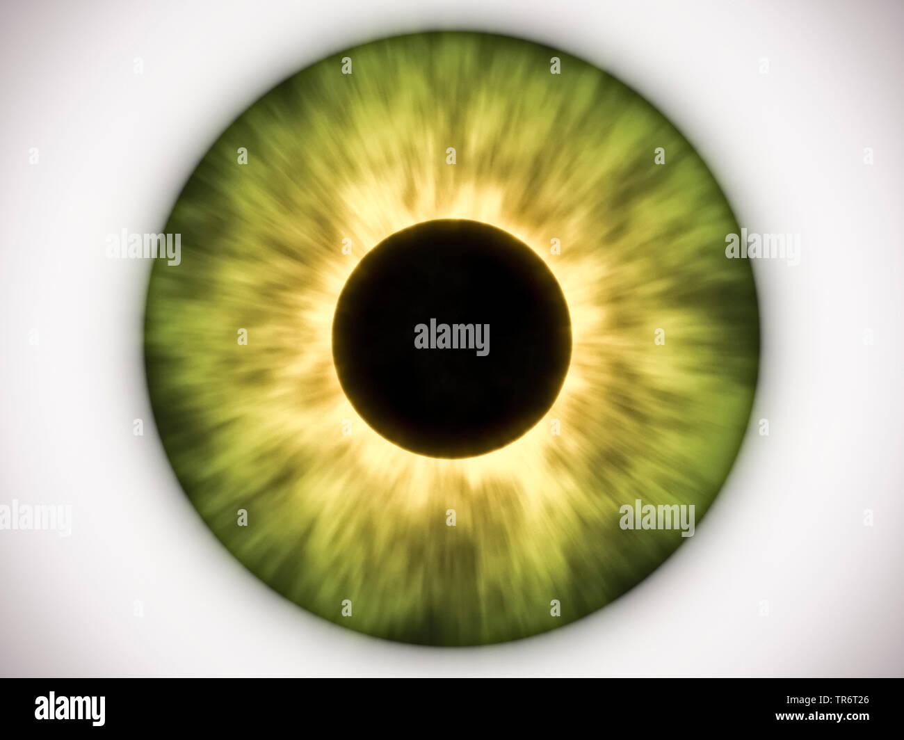 Persone, esseri umani, esseri umani (Homo sapiens sapiens), green Eye ball Immagini Stock