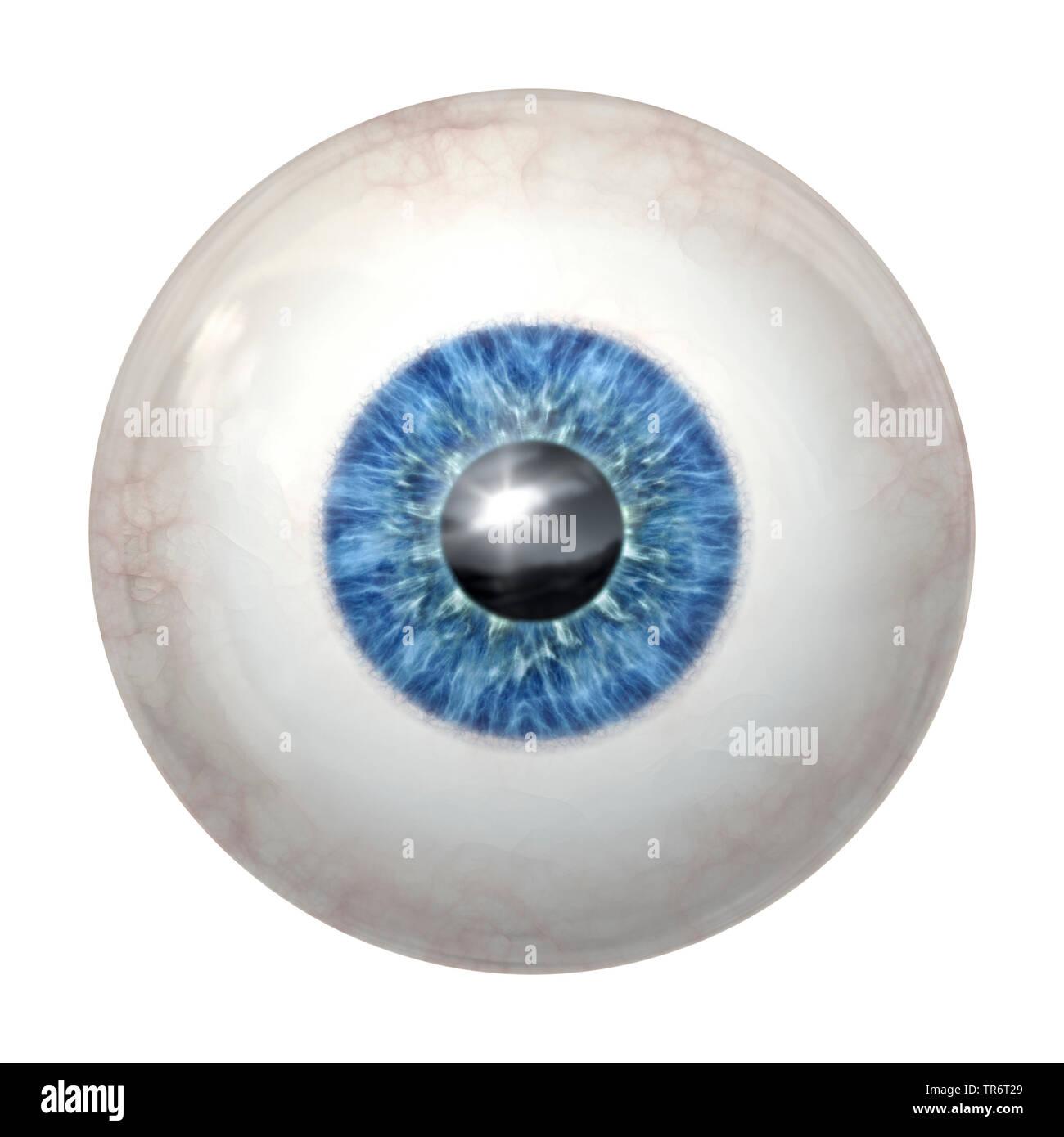 Persone, esseri umani, esseri umani (Homo sapiens sapiens), blue eye ball con tracciato di ritaglio Immagini Stock