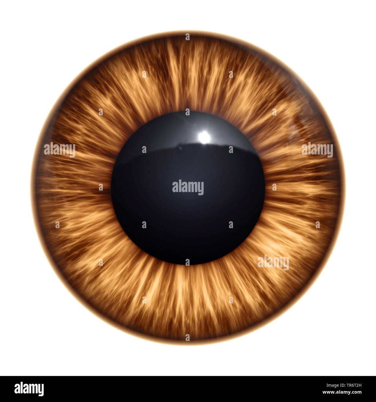 Persone, esseri umani, esseri umani (Homo sapiens sapiens), brown Eye ball con tracciato di ritaglio Immagini Stock