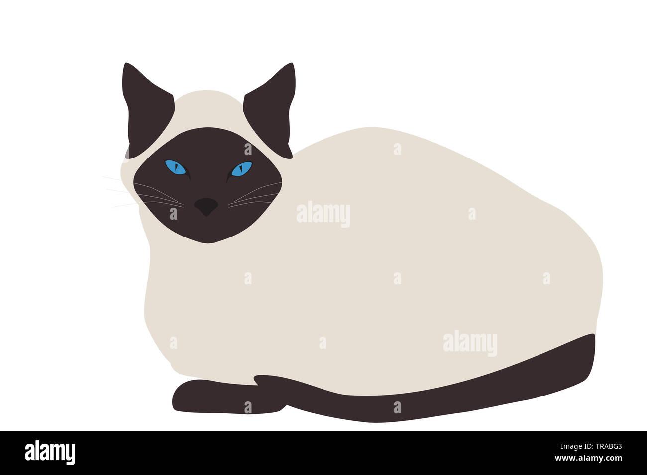 Gatto siamese gatto isolati su sfondo bianco. Tailandese icona kitty, vettoriale EPS 10 Immagini Stock