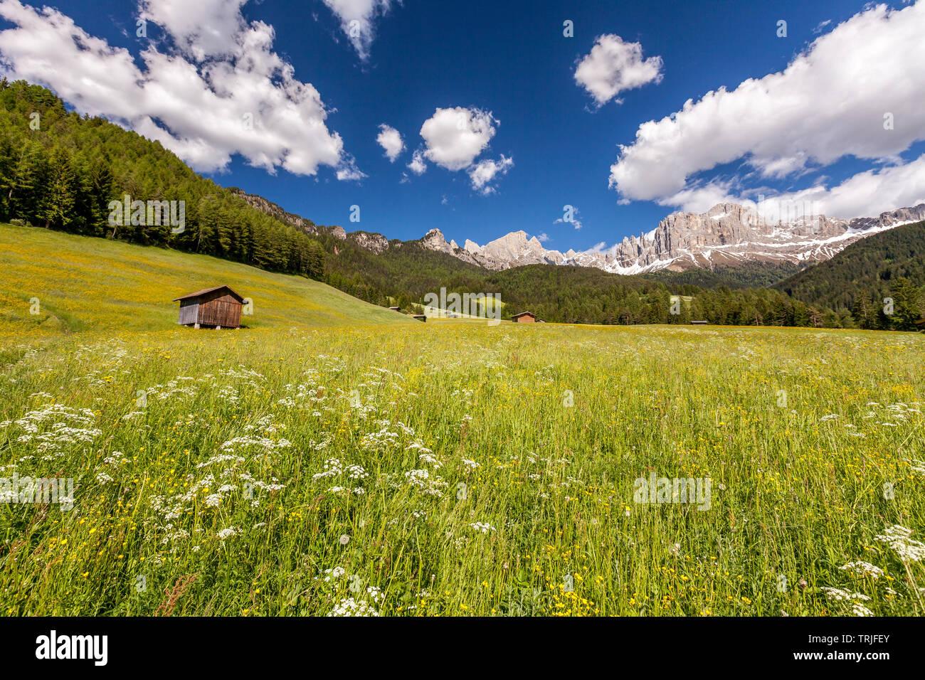 Capanna in legno (maso) nel verde dei prati con le Torri del Vajolet e Catinaccio in background, pneumatici Valley, Dolomiti, Alto Adige, Italia Immagini Stock