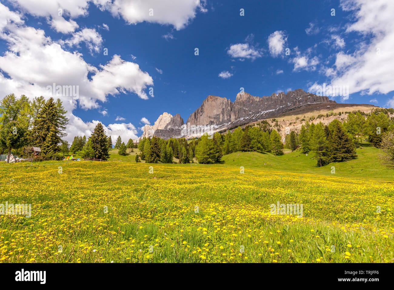 Catinaccio da prati di fiori selvatici in fiore, pneumatici Valley, Dolomiti, la provincia di Bolzano, Alto Adige, Italia Immagini Stock